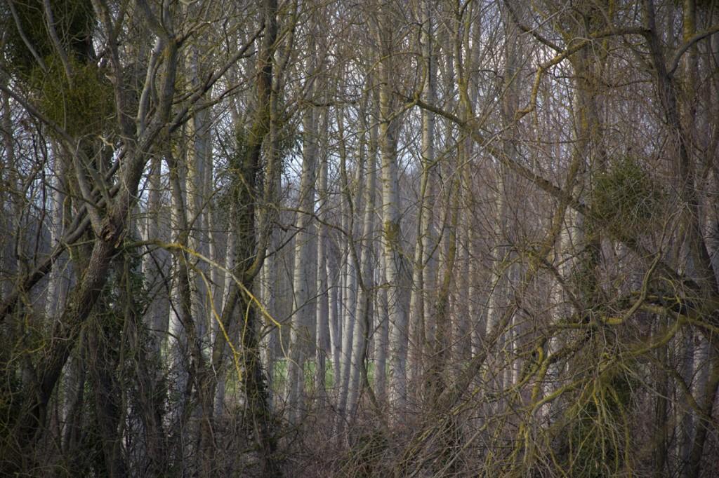 Forest Horizonlrg