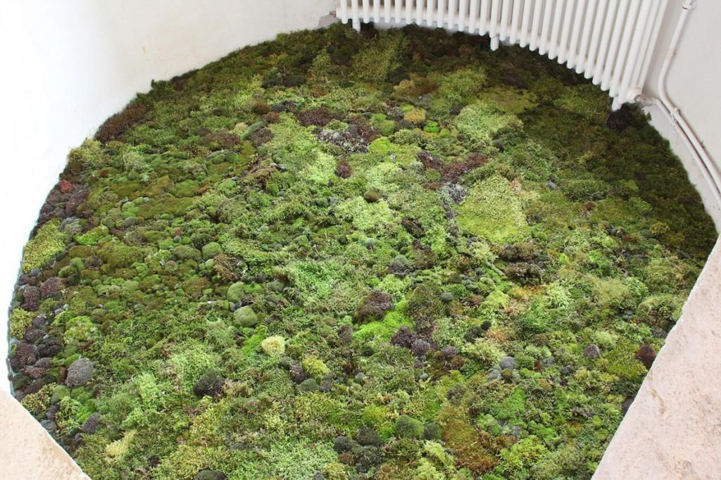 Moss room2