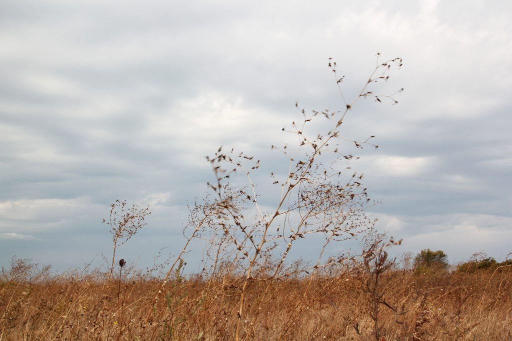Grasses in the thirteen winds